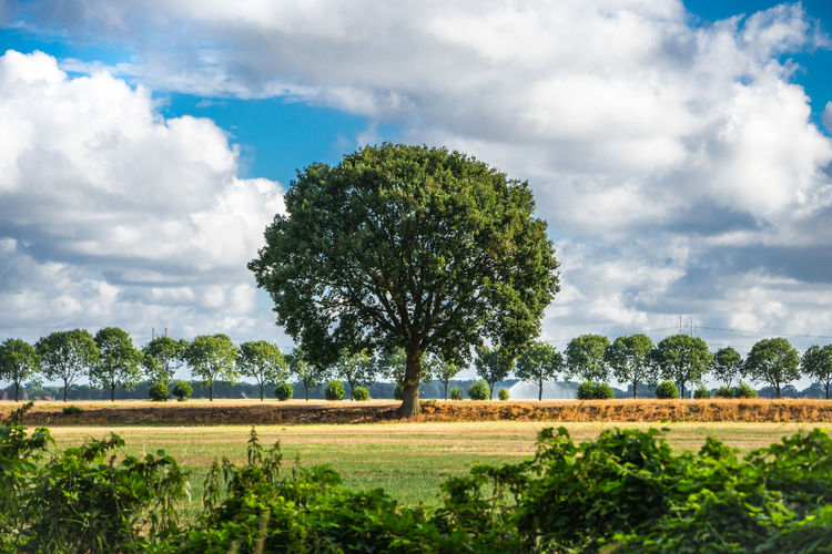 Tree Cloud - Sky Plant Sky Landscape Environment Nature Land Tranquil Scene Scenics - Nature Tranquility Day Beauty In Nature No People Field Growth Outdoors Green Color Grass Non-urban Scene Summer Symmetry Dry Watering Netherlands Alley Holland