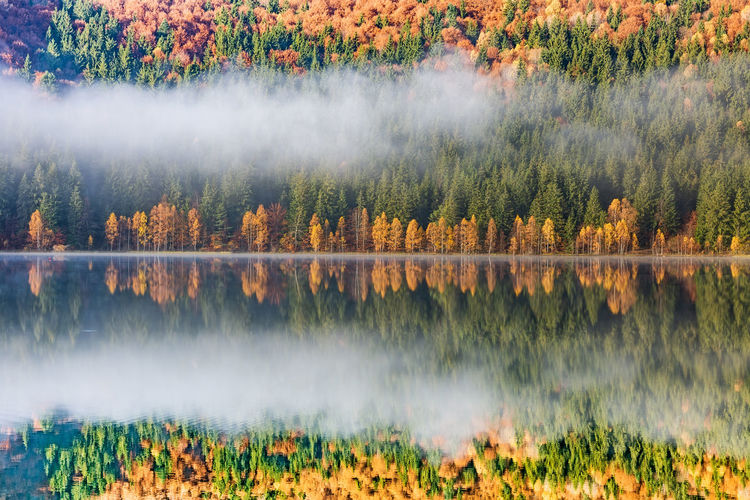 Panoramic view of lake in forest during autumn