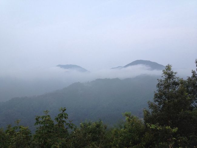 Mountain Fog Coulds And Sky Foggy Morning Tree Grasses Green Location Landscape Nature Beautiful Silence Beautiful Nature Beauty In Nature Adventure Club Hello World Adventure Travel Landscape_Collection Japan Photography Cellphone Photography Japan Hyogo Showcase July Early Morning
