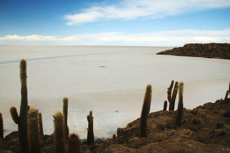 Uyuni Salt Flat Landscape_photography Bolivia Salt Cactus Sky