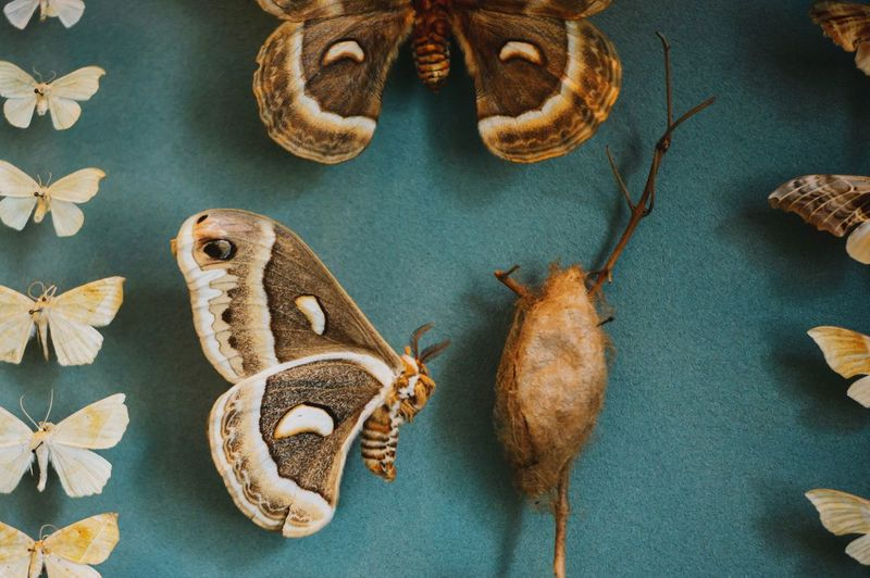 High angle view of insect specimens