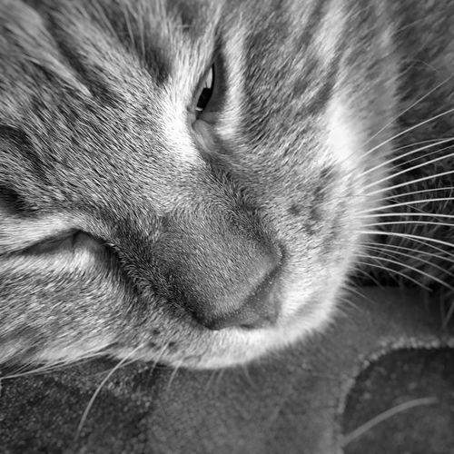 Pets One Animal Domestic Animals Animal Themes Mammal Dog No People Close-up Sleeping Indoors  Domestic Cat Feline Whisker Day