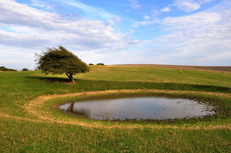 Wind swept tree on South Downs Beauty In Nature Countryside Field Field Green Color Landscape Outdoors Pond Scenics Sky South Downs The South Downs Tranquil Scene Tree Tree Wind Swept
