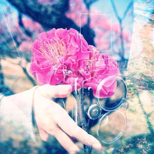 Doubleexposure Igersjp Multipleexposure Shootermag_japan MeetMeJapan 多重露光部 Jp_mxp Meetmejapan_okazaki