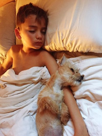 Boy's best friend Boy Boyhood Sweet Dreams Cuddles Snuggles Dreaming Sleepy Cozy Animals Pets Childhood Puppy Love Puppy Dog Rescue Dog EyeEm Selects Bed Furniture Relaxation Child Childhood One Person Real People Indoors  Lying Down Sleeping Bedroom Lifestyles High Angle View Blanket