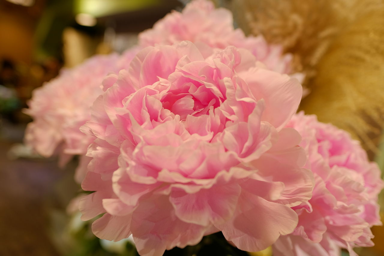 CLOSE-UP OF PINK ROSE FLOWER BOUQUET