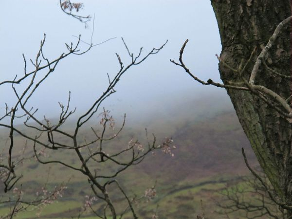 Branch Tree Bare Tree Sky Nature Beauty In Nature No People Outdoors Day Pendle Hill Witchespath Fine Art Photograhy EyeEmbestshots Eeriebeautiful Misty Mornings Scenics Eyeemphotography Witchcraft  Landscape Tranquil Scene Beauty In Nature Eye Em Nature Lover Cold Temperature Change Eerie Beautiful