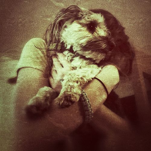 Human Body Part Indoors  One Person Close-up People Human Hand One Man Only Only Men Day pets yorkiepoo dog