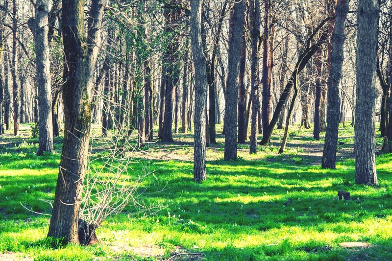 Plant Tree Land