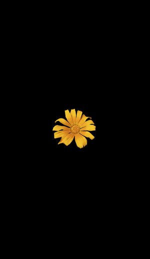 "New series. Background size is 14"" x 8"", image approx 3x3 - 3x2.5 14 X 8 Live Black Background Flower Flowering Plant Large Canvas No People Small Image Yellow"