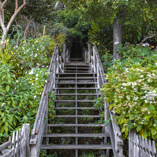 Staircase leading towards gazebo in forest