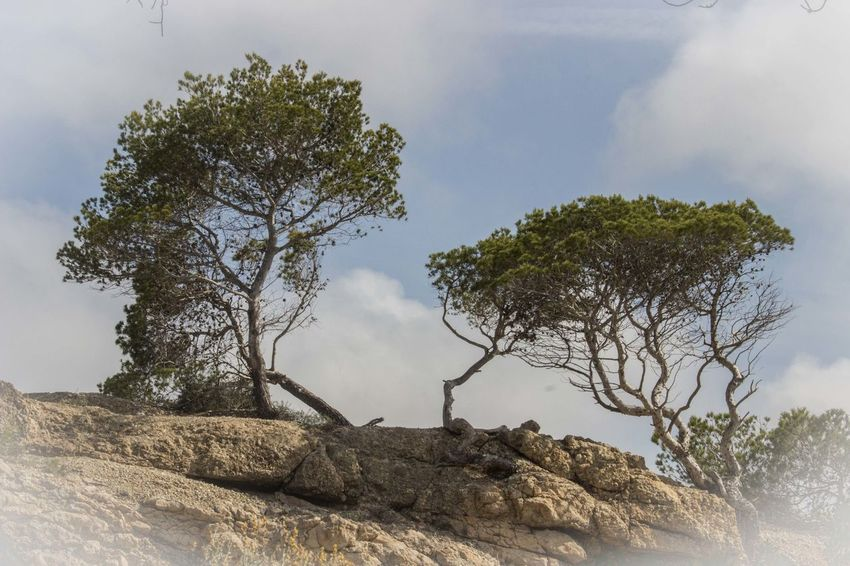 2 Trees Beauty In Nature Cliffs Cliffside Landscape Mallorca Mediterranean  Nature No People Outdoors Peguera Rocks Scenics Sky Stone Material Tree