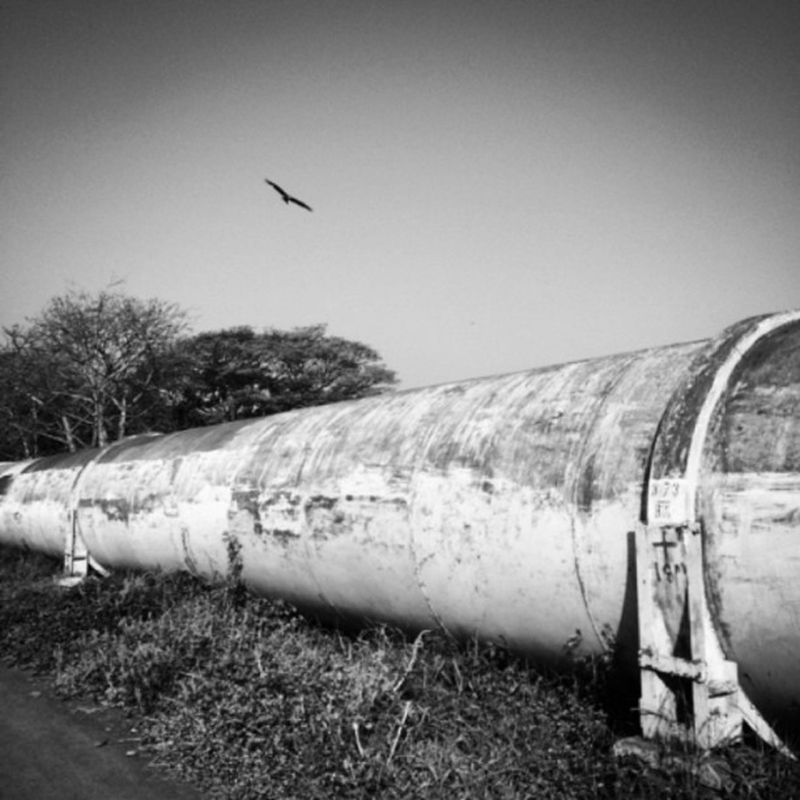 transportation, clear sky, abandoned, field, sky, built structure, old, obsolete, architecture, outdoors, tree, landscape, damaged, day, no people, deterioration, mode of transport, history, run-down, rural scene