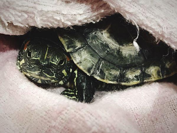 One Animal Turtle 🐢