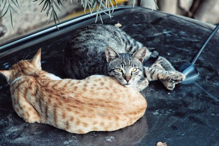 Portrait of cats sitting on top of a car