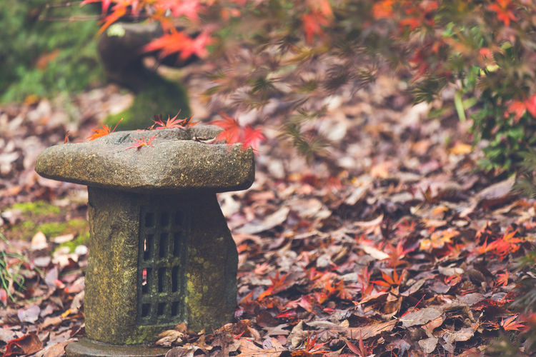 Close-Up Of Stone Lantern By Maple Leaves At Japanese Garden