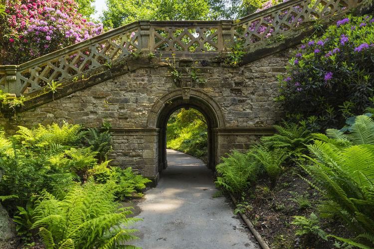Archway and stairway in Hever Gardens, Hever Castle & Gardens, Hever, Edenbridge, Kent, England, United Kingdom Arch Architecture Beauty In Nature Branch Building Exterior Built Structure Day Flower Fragility Freshness Growth Nature No People Outdoors Plant Tree