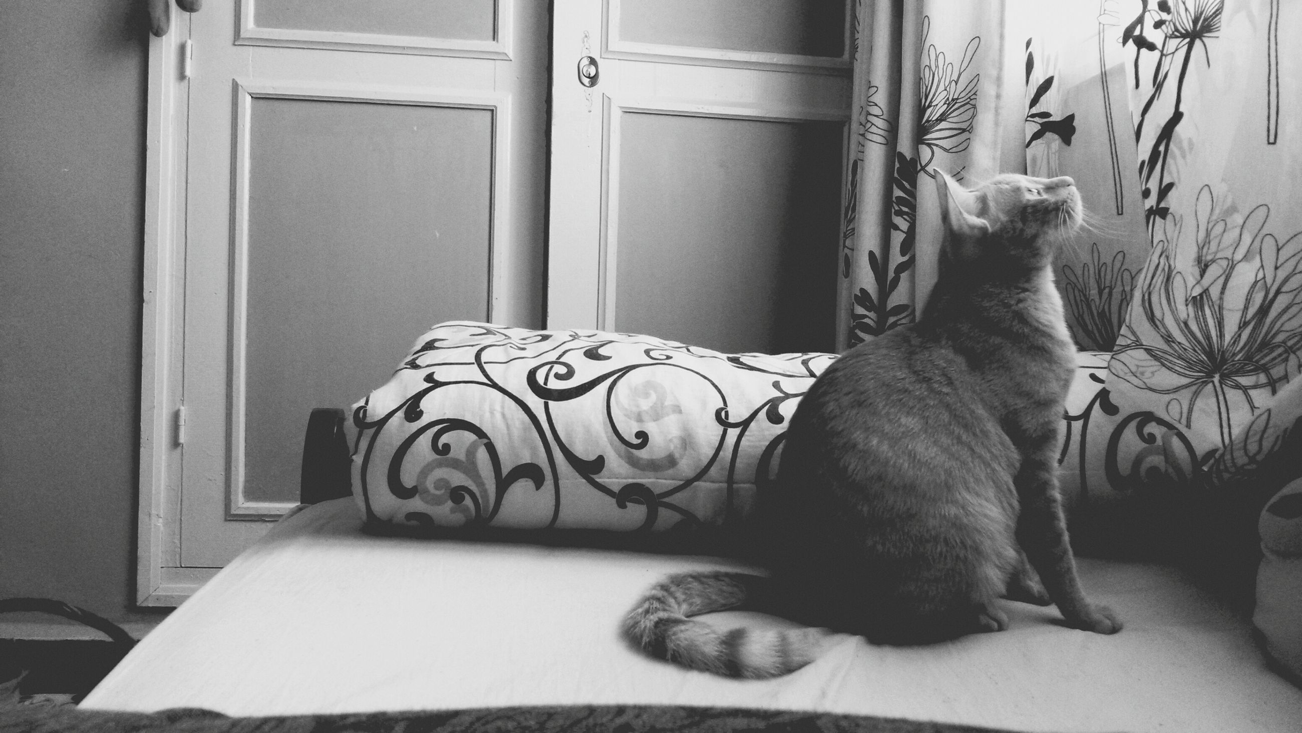 indoors, pets, domestic animals, mammal, one animal, animal themes, home interior, domestic cat, cat, relaxation, bed, feline, lying down, resting, dog, sofa, home, house, door, window