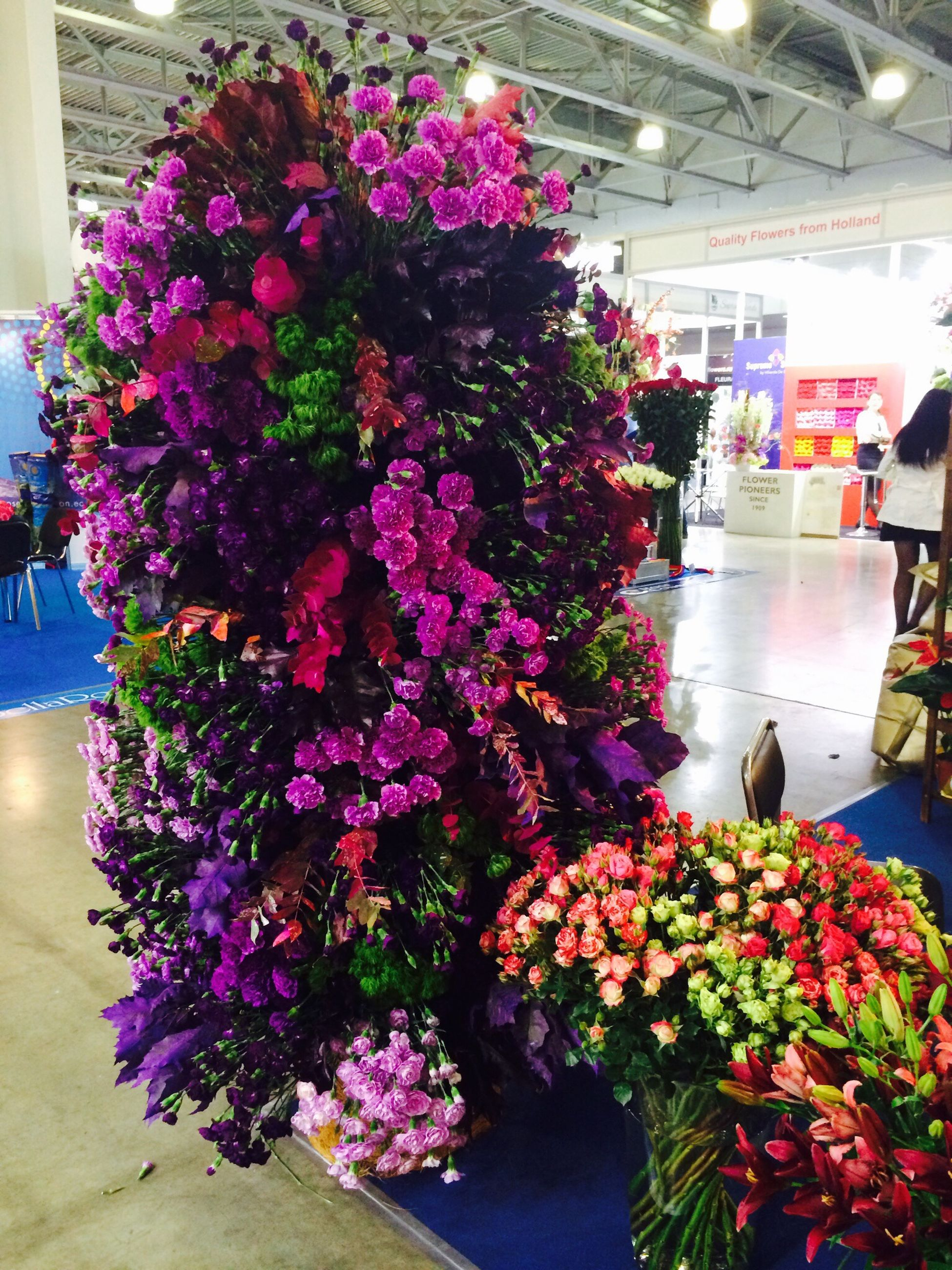 flower, freshness, fragility, potted plant, plant, petal, pink color, indoors, multi colored, growth, bouquet, beauty in nature, variation, nature, blooming, decoration, flower head, high angle view, flower pot, purple