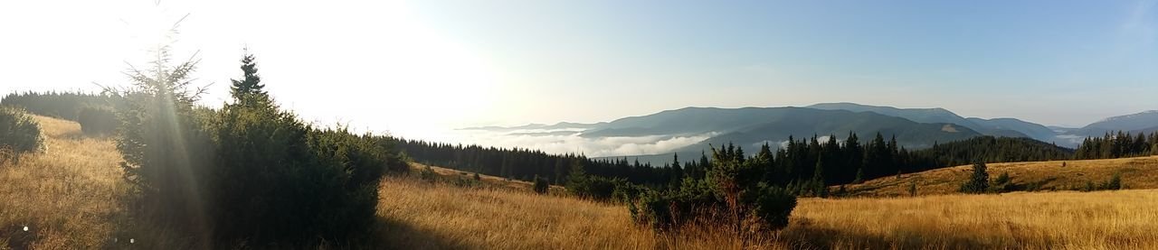 Carpathians. Ukraone. Morning. Sulikopics Ukraine 💙💛 Carpathian Mountains Carpathians Trekking Nature Love Nature Nofilternoedit Mountain Welcome To Ukraine Trekking Adventure Time! Feeling Good Healthy Lifestyle Ilovemountains Landscape Clouds Sky Sun Morning Sulikopics Art Is Everywhere