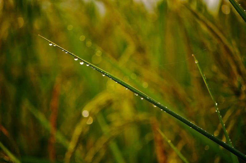 dew Water Drop