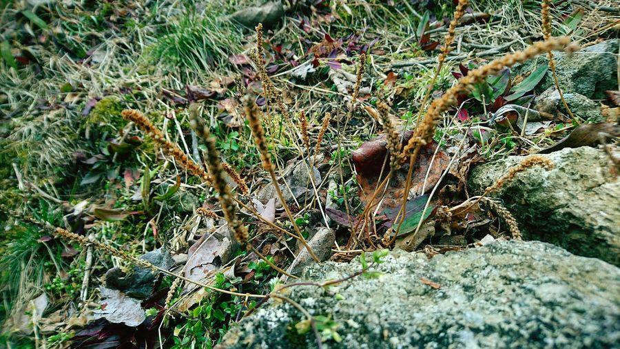 草花 Fly Agaric Edible Mushroom Fallen Tree Toadstool Dead Tree Mushroom Ground Rotten Fungus Dead Plant Moss Slug Bark Fly Agaric Mushroom Growing Lizard Wild