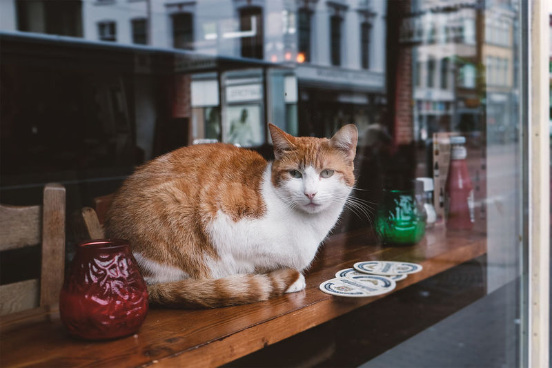 Cat Day Domestic Cat Indoors  Mammal No People One Animal Pets Streetphotography Whisker
