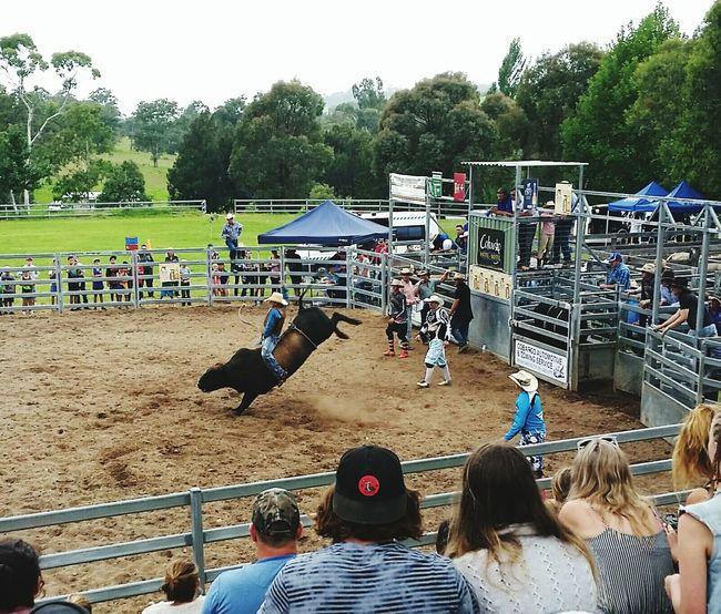 Bucking Bull Rodeo Bullriding Cobargo