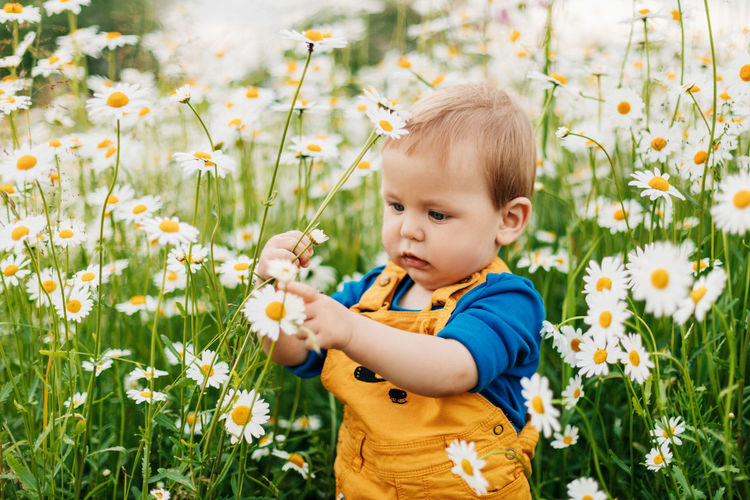 A charming boy stands in a flowery meadow with chamomile flowers