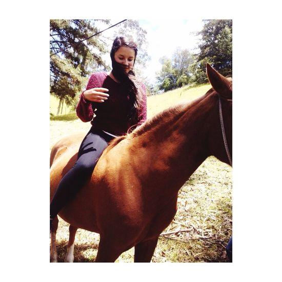 Horse Animal Photography Animal Animal Love Montando A Caballo
