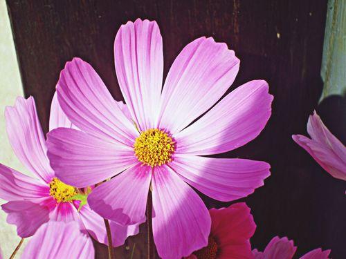 Purple Flower Flower Nature EyeEm Nature Lover