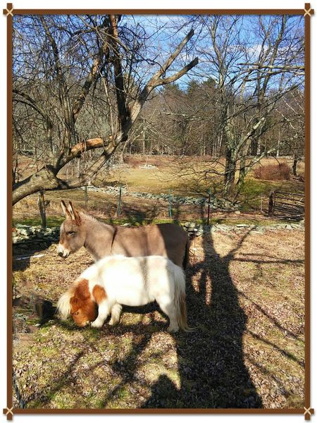 Spring Has Arrived Horse Love Mini Horse Donkey Nature Tree
