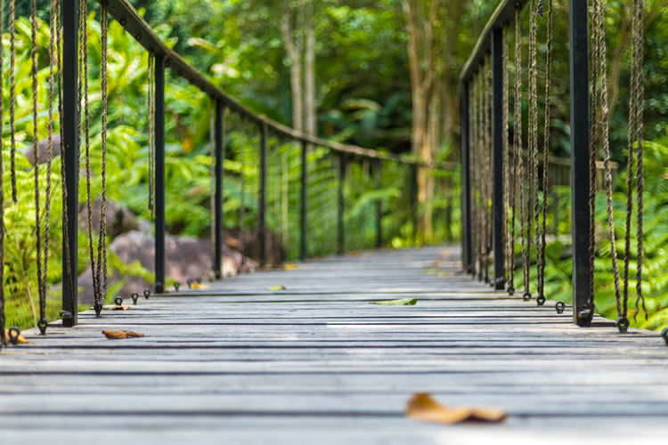 Surface level of walkway amidst trees in forest