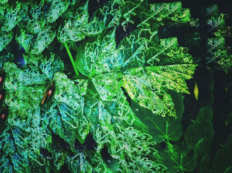Enchanted forest. Green Fantasy. Abstract Leaf Green Color Beauty In Nature Forest Backgrounds Outdoors Growth Tree Close-up EyeEm Meet Up 2017. EyeEm Best Shots Linde Shores Conservation Area Whitby. Enchanted Forest