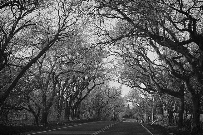 As seen on my travels to Sonoma County LlanoRoad Sonomacounty Oaktrees Photography Canon Canont3