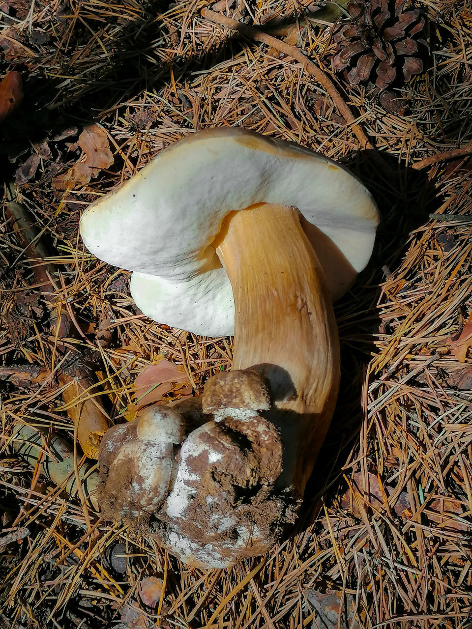 HIGH ANGLE VIEW OF MUSHROOMS IN FIELD