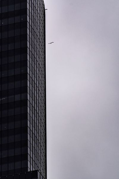 Birds Seagals Building Exterior Architecture Built Structure Office Building Exterior Skyscraper Low Angle View City Tall - High Building Office No People Sky Modern Nature Tower Day Outdoors Window Copy Space Development Adventures In The City