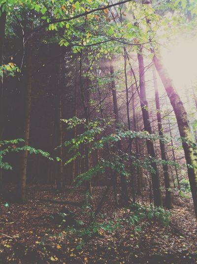 Sunlight in the woods. EyeEm Nature Lover Sunbeam In The Forest