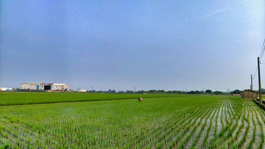 Taking Photos Enjoying Nature Rice Field Nature Photography Enjoying The View Enjoying Life Photography Country Life Check This Out Country