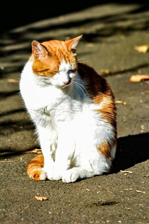 Just because you have a cat-astrophic day, doesn't mean you're gonna have a cat-astrophic life....... Cat Sunbathing Cat Caturday Taking Photos Nature Photography Nikon D5200 Nature Lover Nikkor For The Love Of Photography Manual Mode Photography Just For Fun