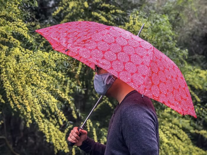 Midsection of man holding red umbrella against flowering golden wattle.