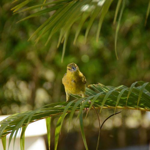 Nature Bird $taying Focused!!!