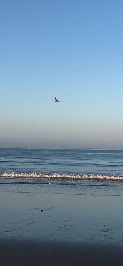 Morning Beachphotography Morning Life Is A Beach Ocean Sea Water Beach Sky Land Bird Vertebrate Horizon Over Water Clear Sky Tranquility