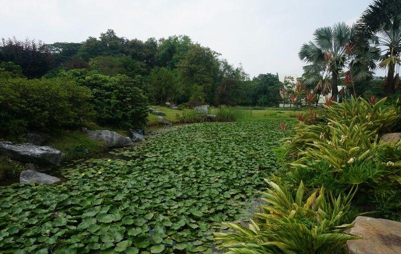 Scenic view of water flowing in garden