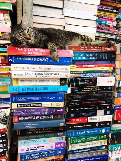 Cat sleeping on Books | Chatuchak Weekend Market Chatuchak Weekend Market Bangkok Bücher  Buch Bookstore Books Book Katzen Katze Cats Cat Text Multi Colored No People Communication Day Western Script Outdoors Arrangement Information Paper EyeEmNewHere
