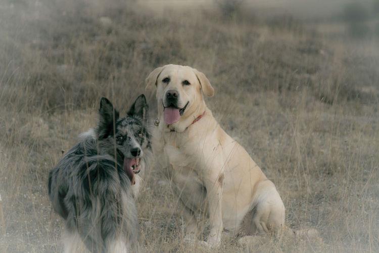 Dog Pets Mammal