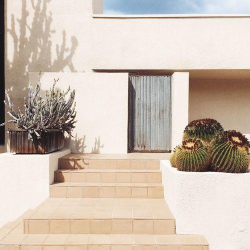 Californian homes Architecture California Entrance Cactus West Coast Minimalism Minimalist Stairs Lines Clean Lines La Los Angeles, California Manhattan Beach The KIOMI Collection The Architect - 2016 EyeEm Awards