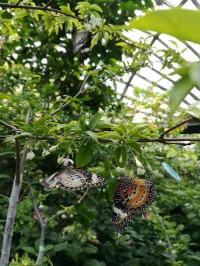 Butterfly ❤ Outdoors Close-up Tree Beauty In Nature 3 Butterflies Flowers, Nature And Beauty Day Fragility Colourful And Pattern Wing Leaves🌿 Greenlife Animal Themes Animals In The Wild