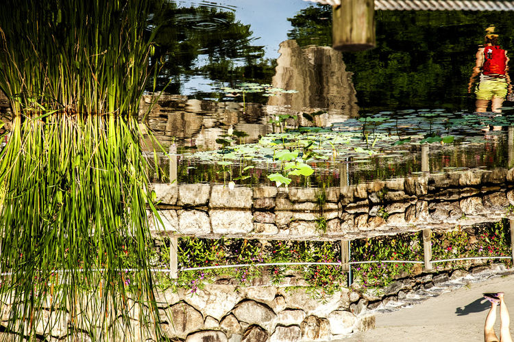 Ancient Civilization Culture Cultures Day Forest Fountain Graffiti Growth Moss Motion Namsan Traditional House Village Outdoors Plant Pond Pond Religion Rock Rock - Object Ruined Stone Stone Wall Tree Tree Trunk Upsidedown Water Refelection