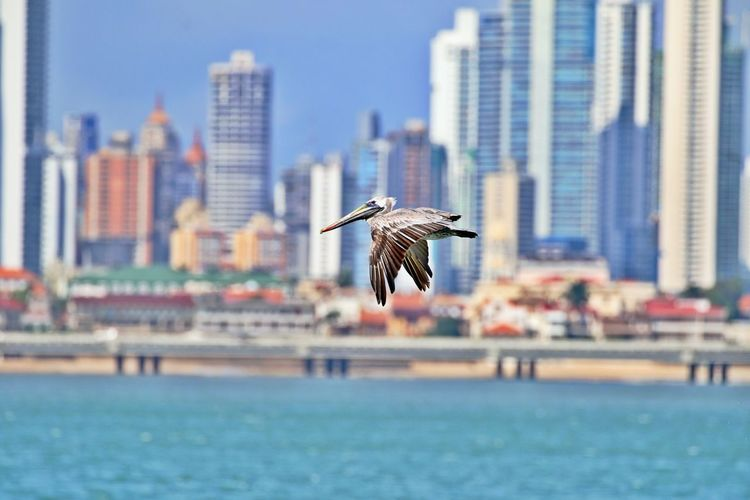 Seagull flying over sea against buildings in city
